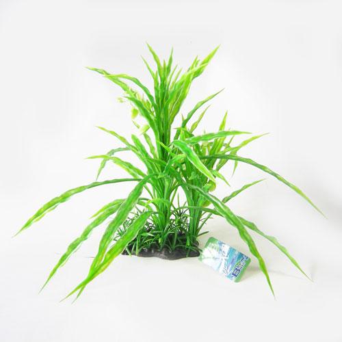 Pianta acquario amazzonia 224952 for Piante per acquario online