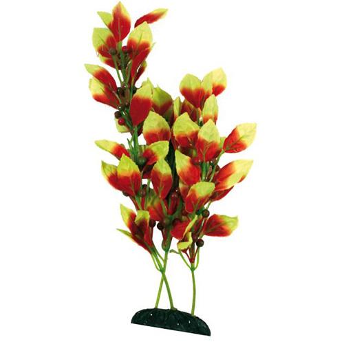 Pianta acquario beauty plants ludwigia xl for Tartarughiera in plastica grande