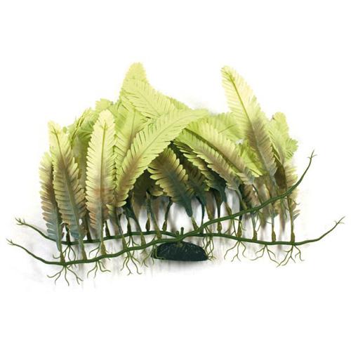 Pianta acquario beauty plants caulerpa for Piante finte per acquario