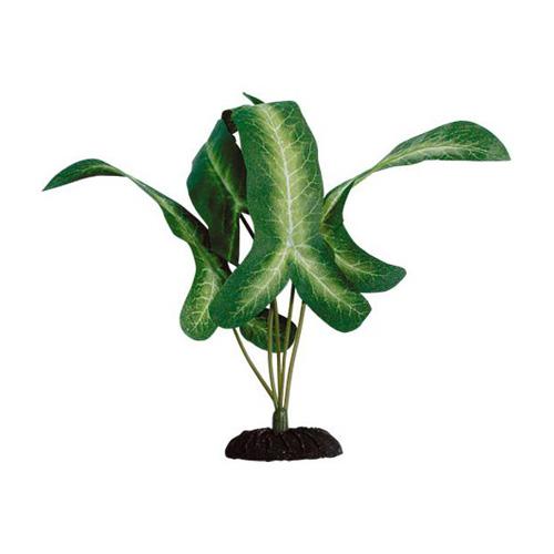 Pianta acquario beauty plants syngonium sp green lg 8sp0402 for Piante finte per acquario