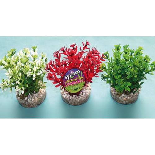 Pianta acquario nano flowering bush for Piante finte per acquario