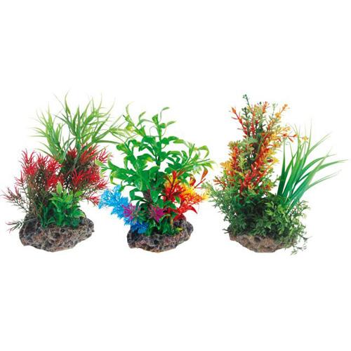 Pianta acquario plant on stone 1 8011040 for Piante per acquario online
