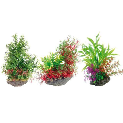 Pianta acquario plant on stone 2 8011046 for Piante per acquario online