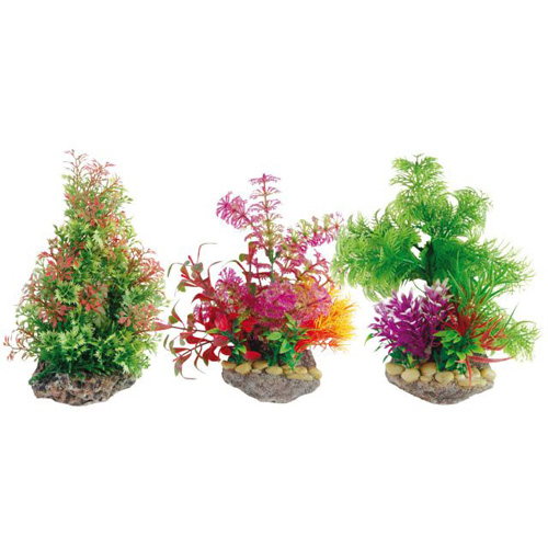 Pianta acquario plant on stone 3 8011047 for Piante per acquario online