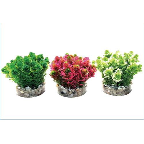 Pianta acquario grass bush 226380 for Piante per acquario online
