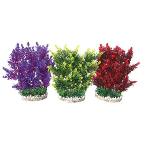 Pianta acquario hedge 497081 for Piante per acquario online