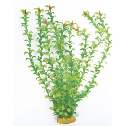 Pianta acquario classic hygrophila sm 1249 for Piante finte per acquario