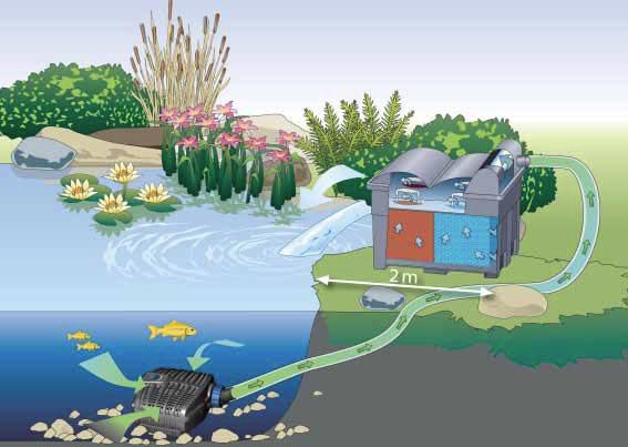 Come scegliere la miglior pompa da laghetto for Filtro per laghetto autocostruito